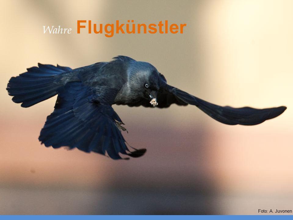 Wahre Flugkünstler