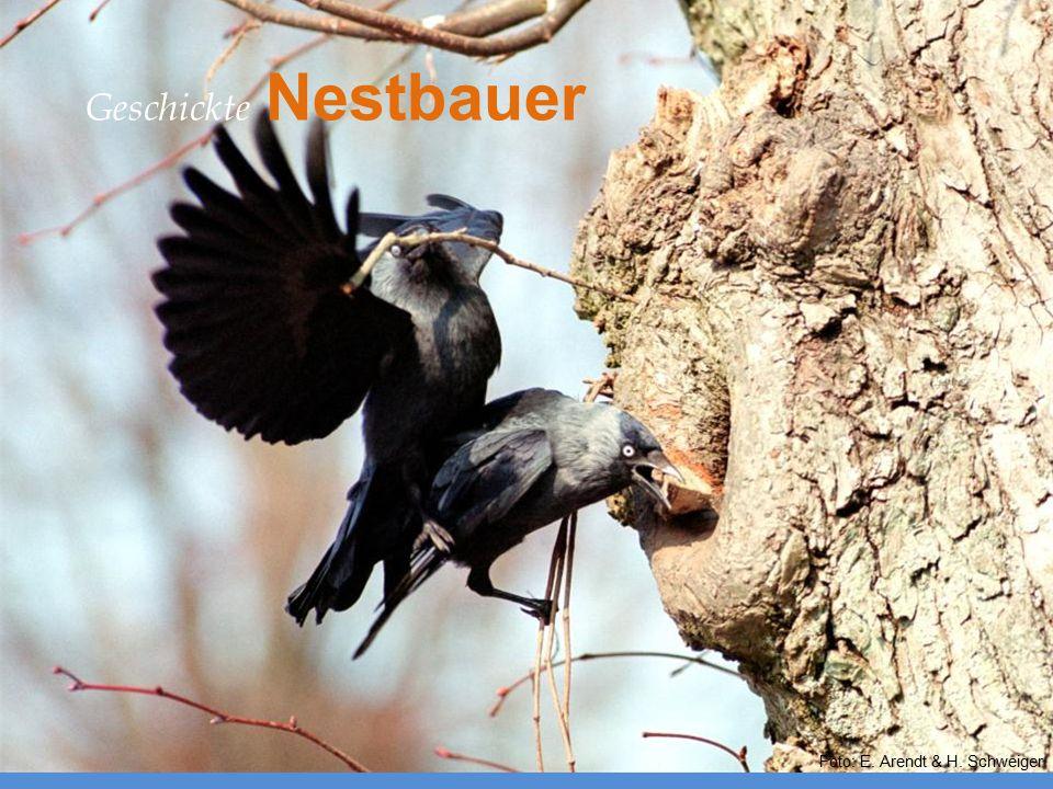 Nestgestaltung Geschickte Nestbauer