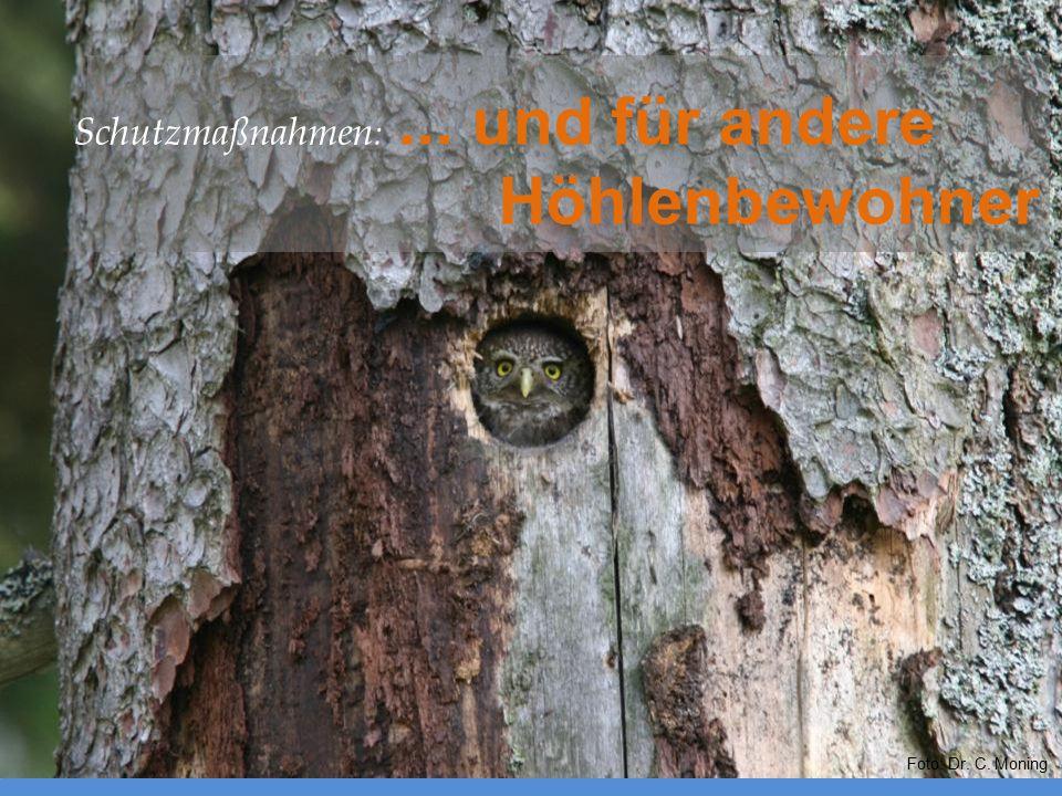 Schutzmaßnahmen: ... und für andere Höhlenbewohner