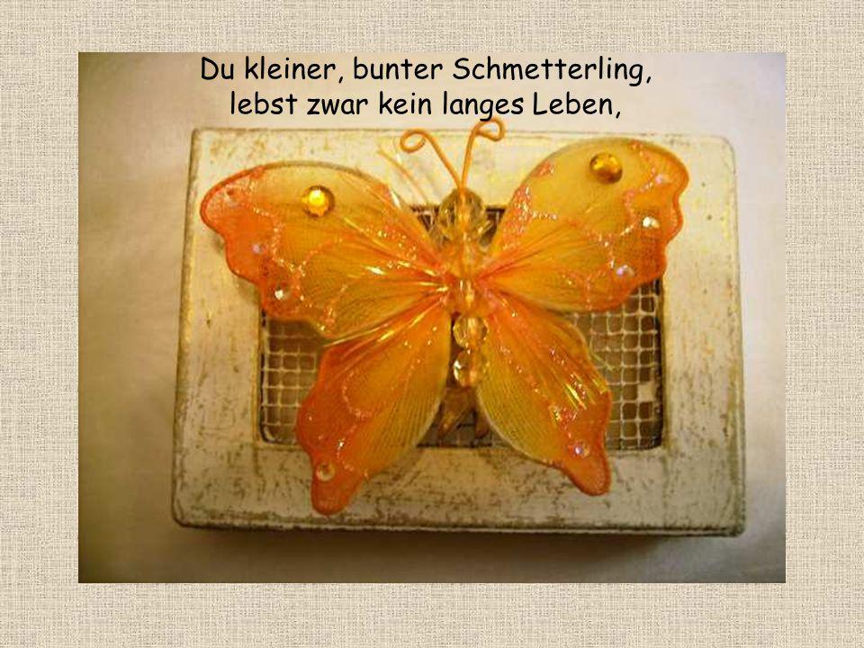 Du kleiner, bunter Schmetterling, lebst zwar kein langes Leben,