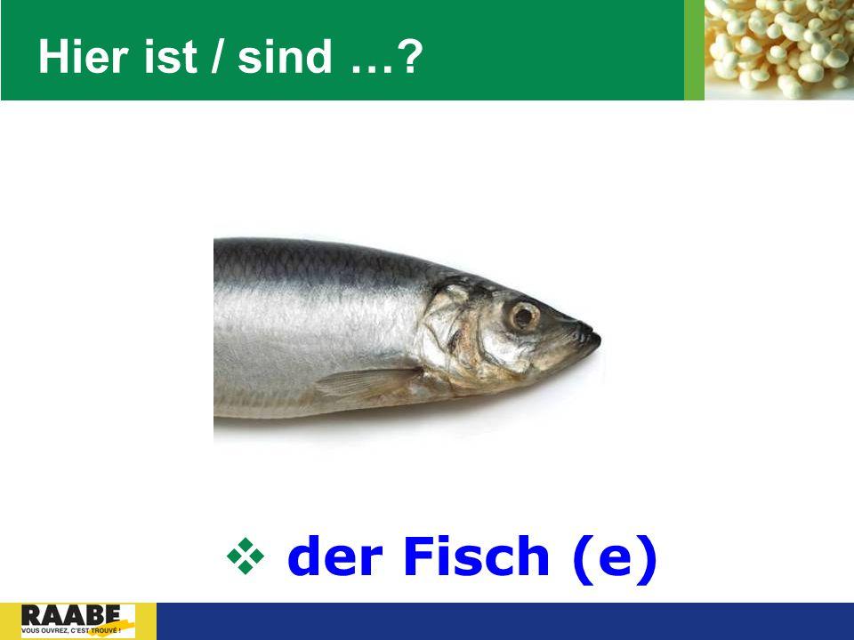 Hier ist / sind … der Fisch (e)