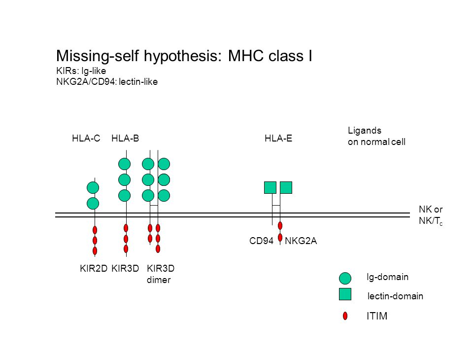 Missing-self hypothesis: MHC class I