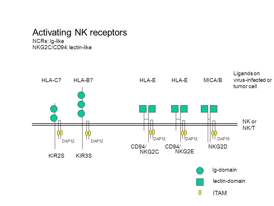 Activating NK receptors