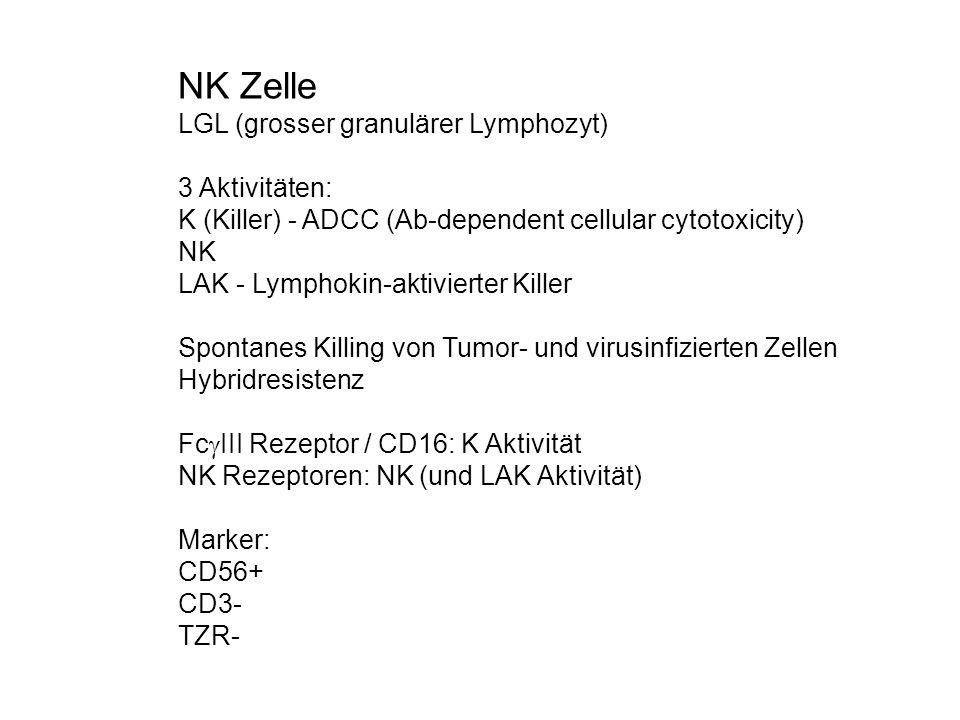 NK Zelle LGL (grosser granulärer Lymphozyt) 3 Aktivitäten: