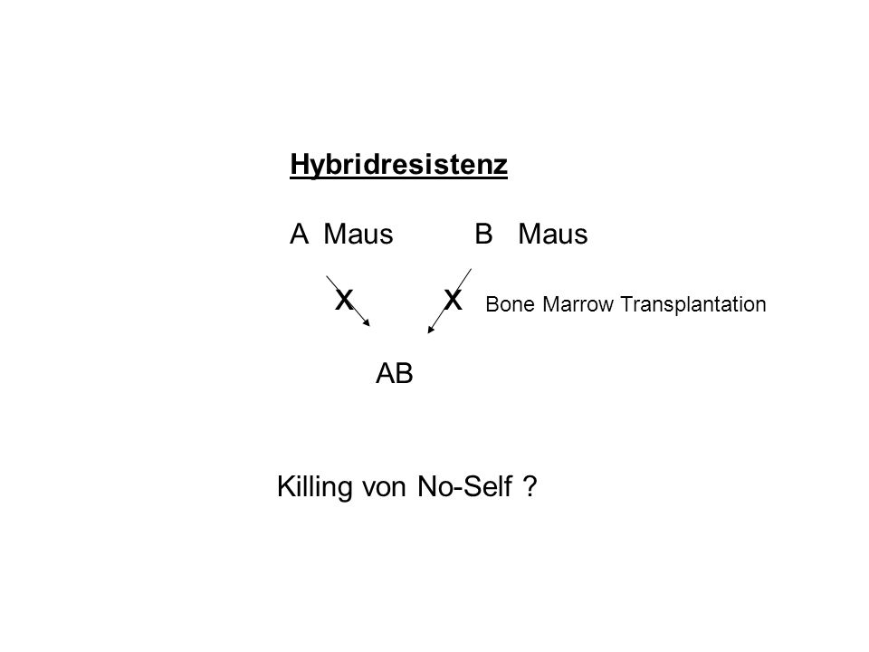 x x Hybridresistenz A Maus B Maus AB Killing von No-Self