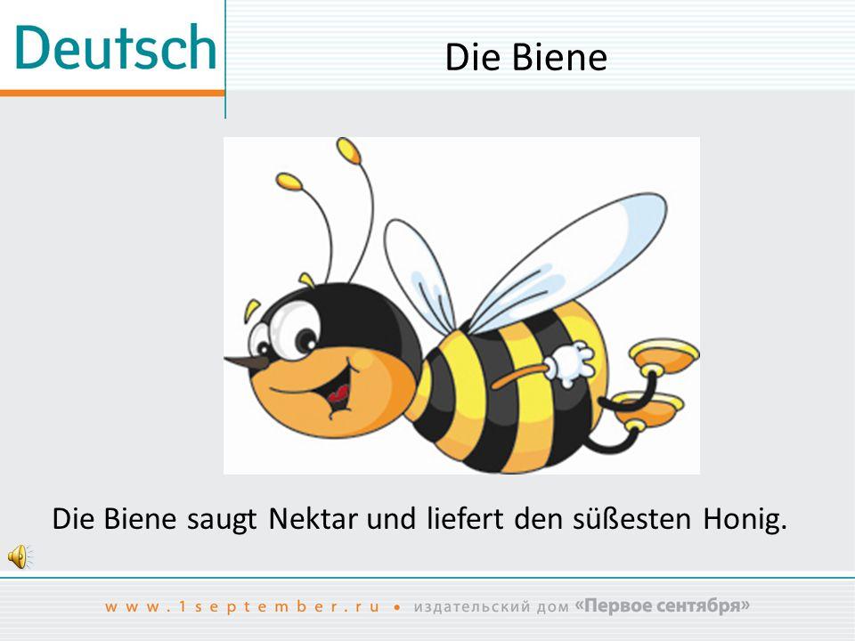 Die Biene Die Biene saugt Nektar und liefert den süßesten Honig.