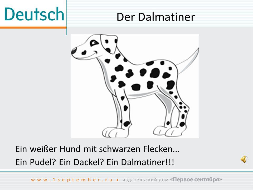 Der Dalmatiner Ein weißer Hund mit schwarzen Flecken...
