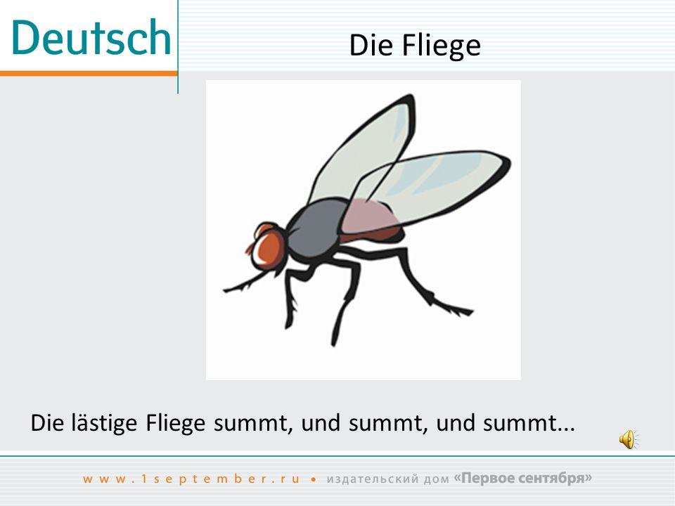 Die Fliege Die lästige Fliege summt, und summt, und summt...