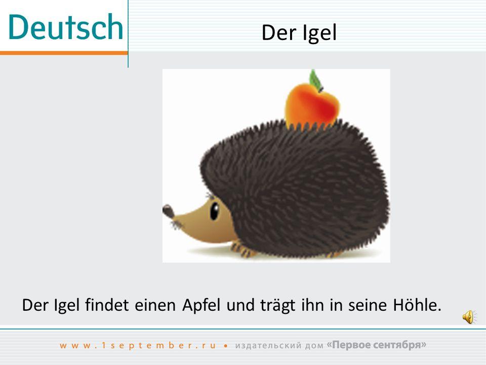 Der Igel Der Igel findet einen Apfel und trägt ihn in seine Höhle.
