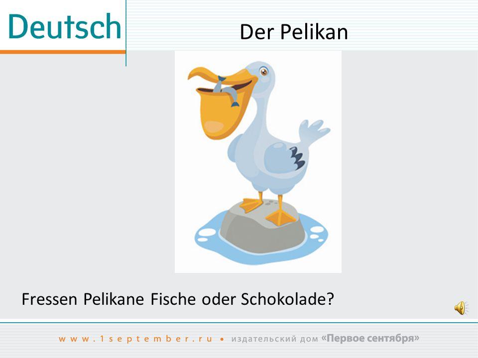Der Pelikan Fressen Pelikane Fische oder Schokolade