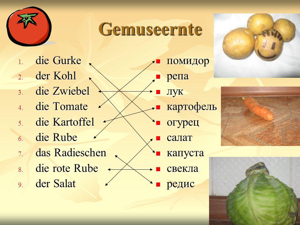 Gemuseernte die Gurke der Kohl die Zwiebel die Tomate die Kartoffel