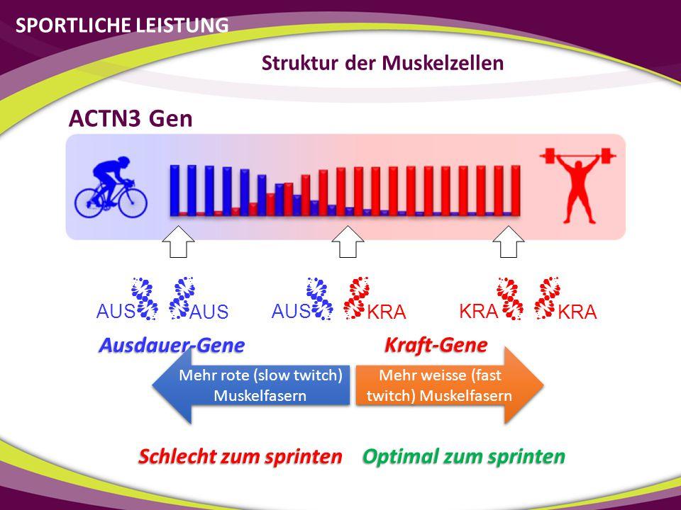 Struktur der Muskelzellen