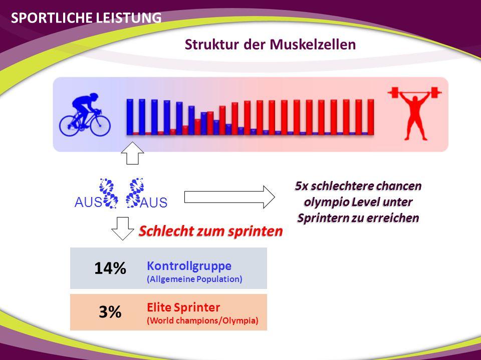 14% 3% SPORTLICHE LEISTUNG Struktur der Muskelzellen