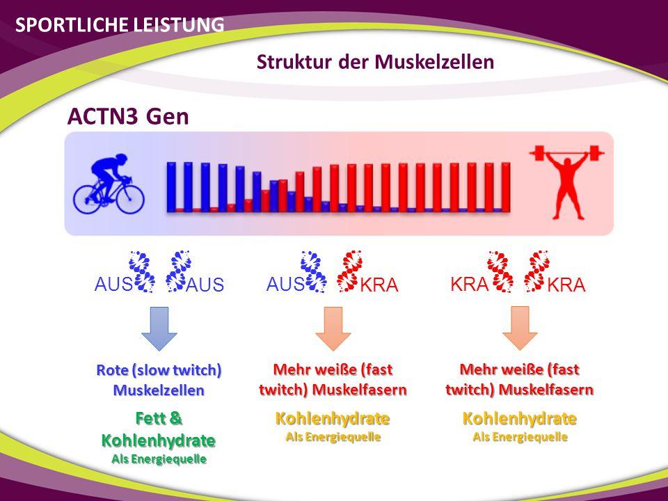 ACTN3 Gen SPORTLICHE LEISTUNG Struktur der Muskelzellen AUS AUS AUS