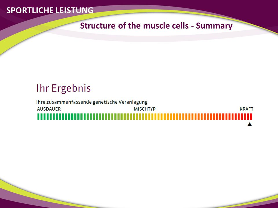 Structure of the muscle cells - Summary