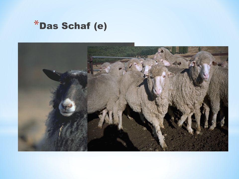 Das Schaf (e)