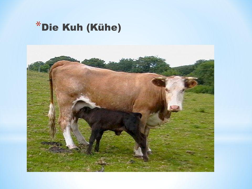 Die Kuh (Kühe)