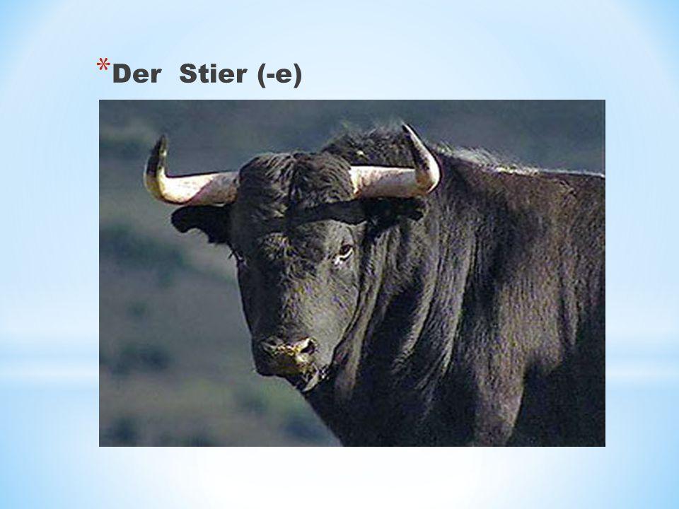 Der Stier (-e)