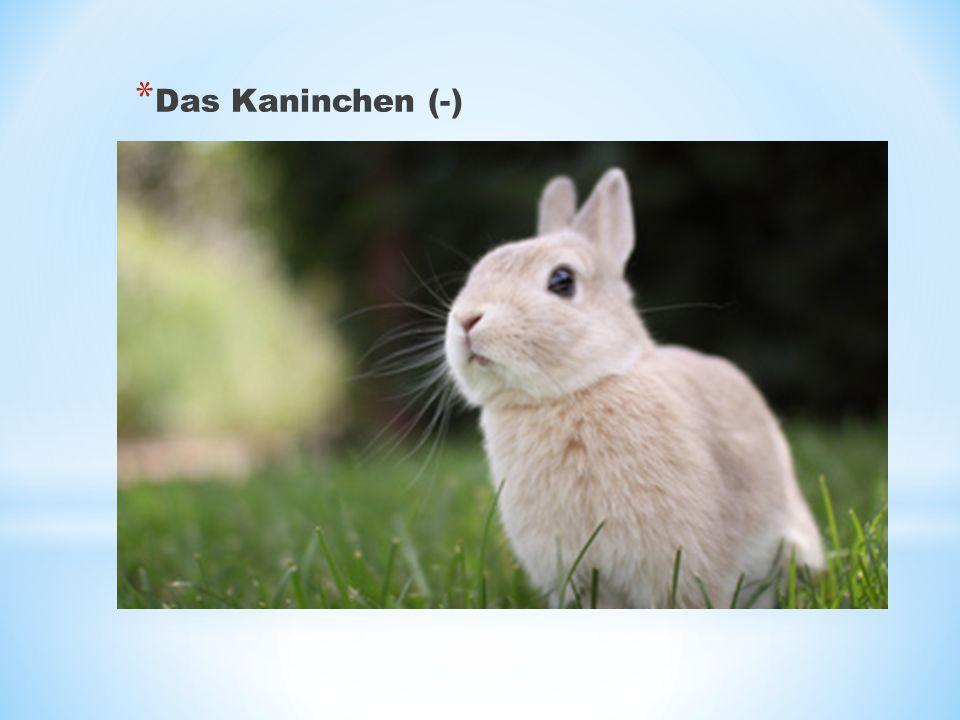 Das Kaninchen (-)