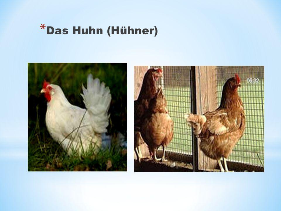 Das Huhn (Hühner)