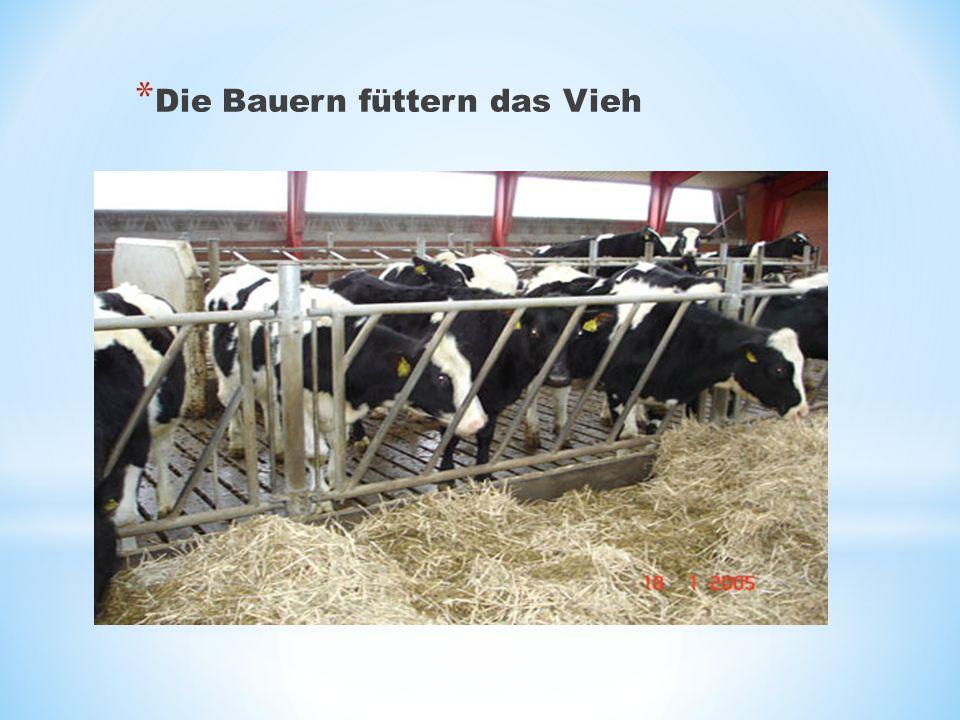 Die Bauern füttern das Vieh