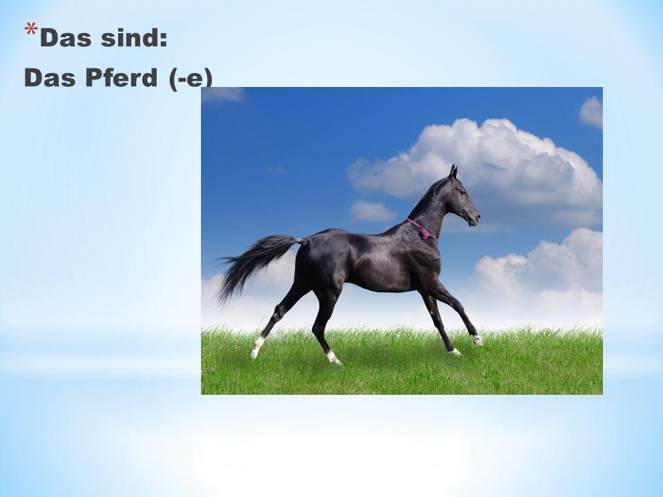Das sind: Das Pferd (-e)
