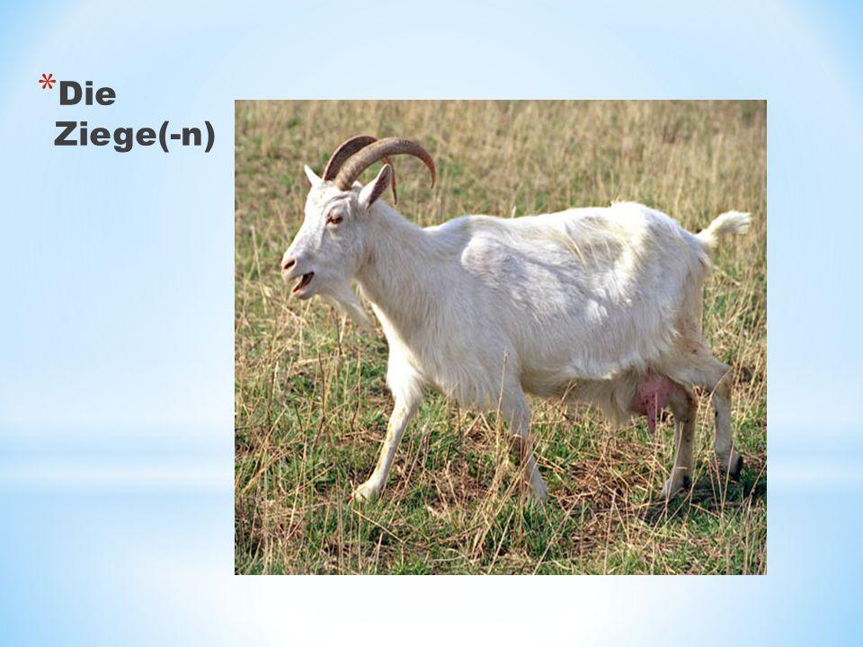Die Ziege(-n)