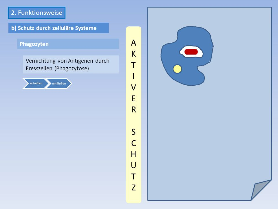 AKT I VER SCHUTZ 2. Funktionsweise b) Schutz durch zelluläre Systeme