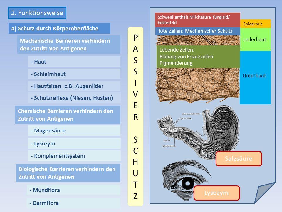 PASS I V E R SCHUTZ 2. Funktionsweise Salzsäure Lysozym