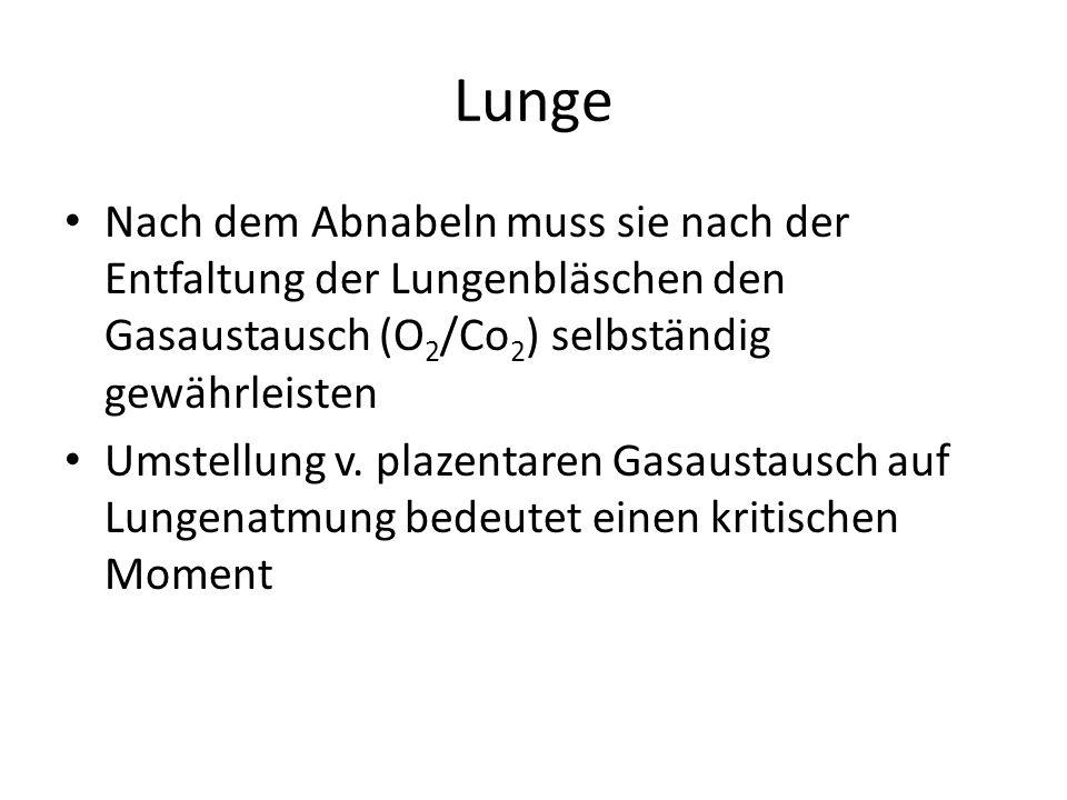 Lunge Nach dem Abnabeln muss sie nach der Entfaltung der Lungenbläschen den Gasaustausch (O2/Co2) selbständig gewährleisten.