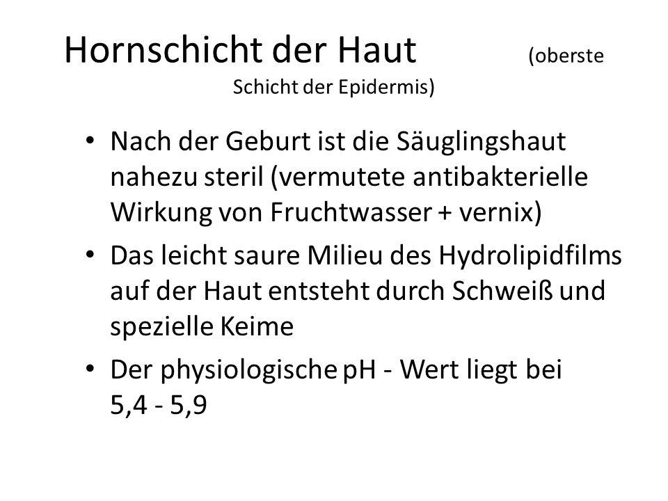 Hornschicht der Haut (oberste Schicht der Epidermis)