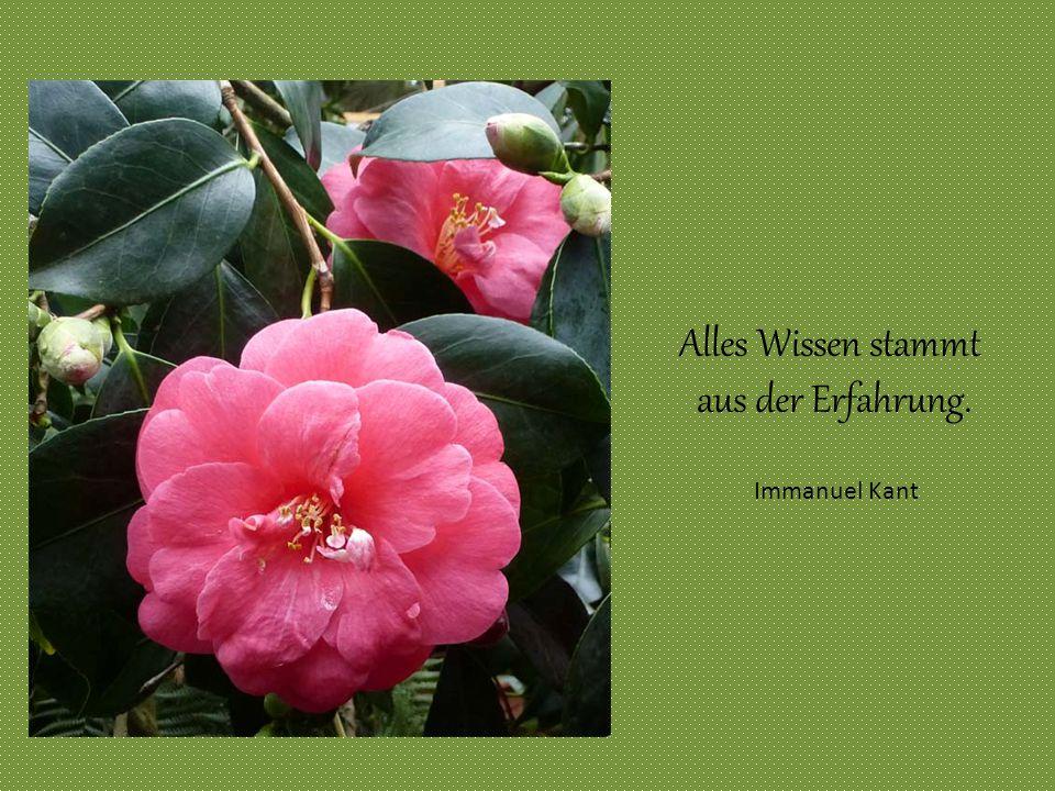 Alles Wissen stammt aus der Erfahrung. Immanuel Kant Immanuel Kant