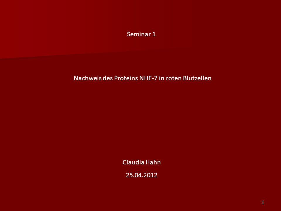 Nachweis des Proteins NHE-7 in roten Blutzellen