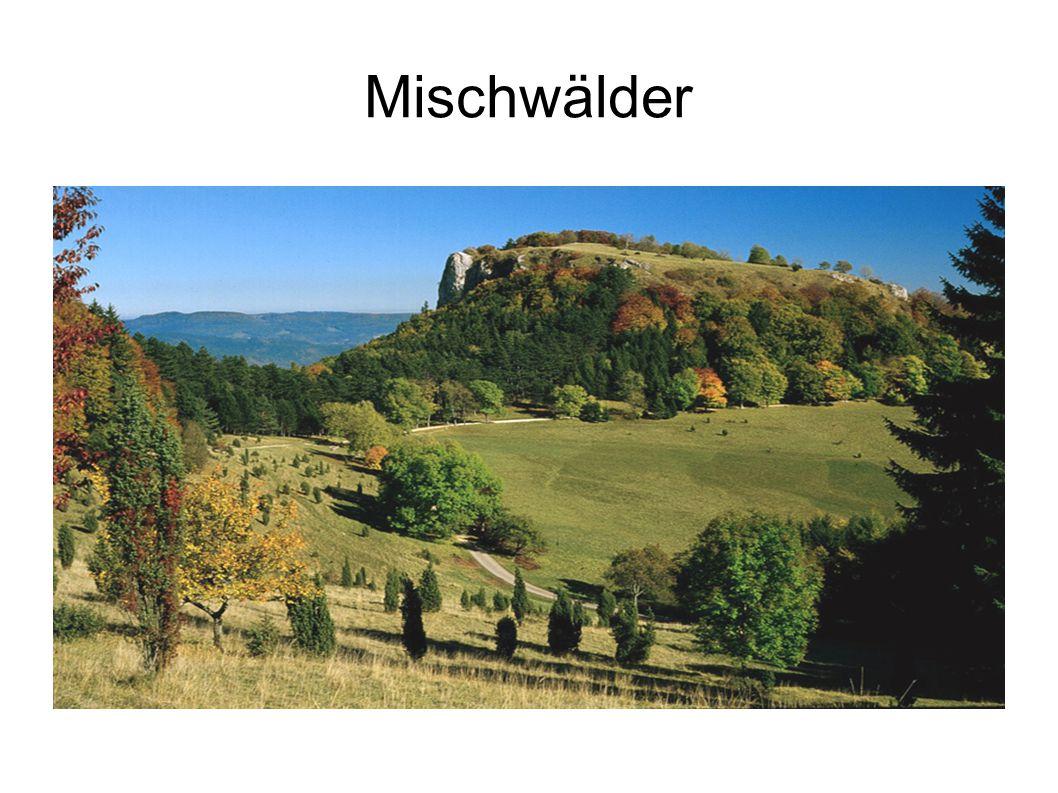 Mischwälder