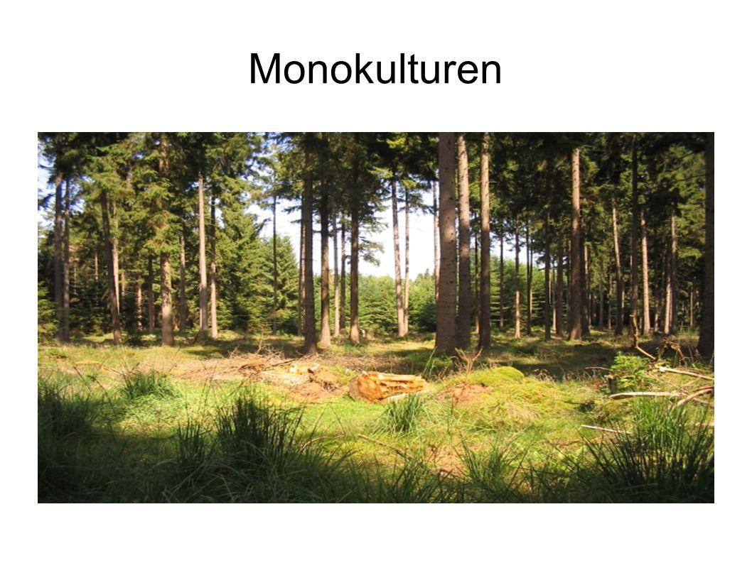 Monokulturen