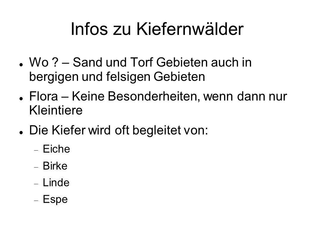Infos zu Kiefernwälder