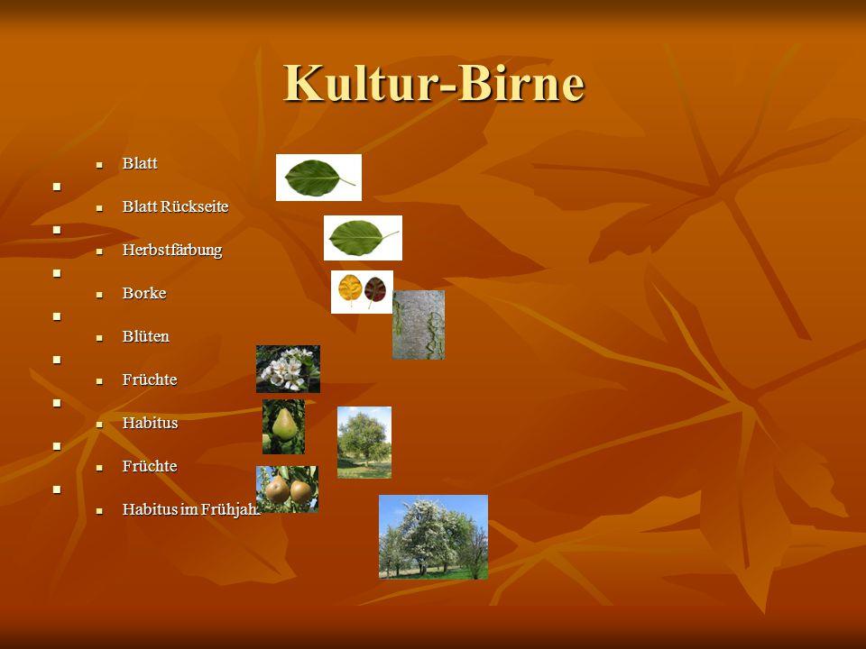 Kultur-Birne Blatt Blatt Rückseite Herbstfärbung Borke Blüten Früchte