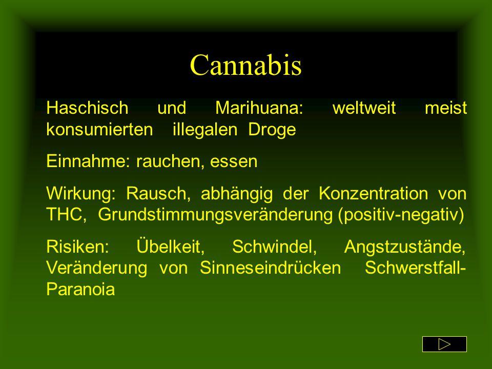 Cannabis Haschisch und Marihuana: weltweit meist konsumierten illegalen Droge. Einnahme: rauchen, essen.