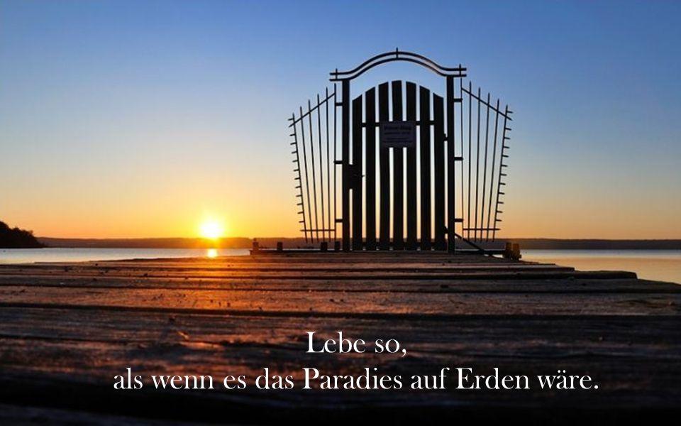 als wenn es das Paradies auf Erden wäre.