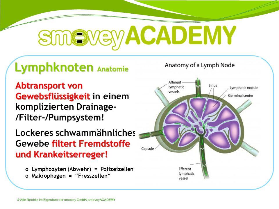 Lymphknoten Anatomie Abtransport von Gewebsflüssigkeit in einem komplizierten Drainage-/Filter-/Pumpsystem!