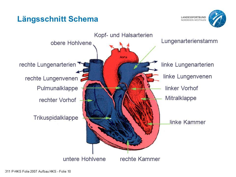 Längsschnitt Schema linke Lungenarterien linke Lungenvenen
