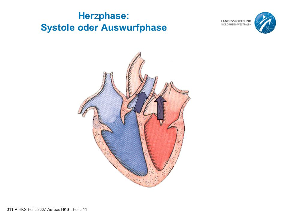 Herzphase: Systole oder Auswurfphase