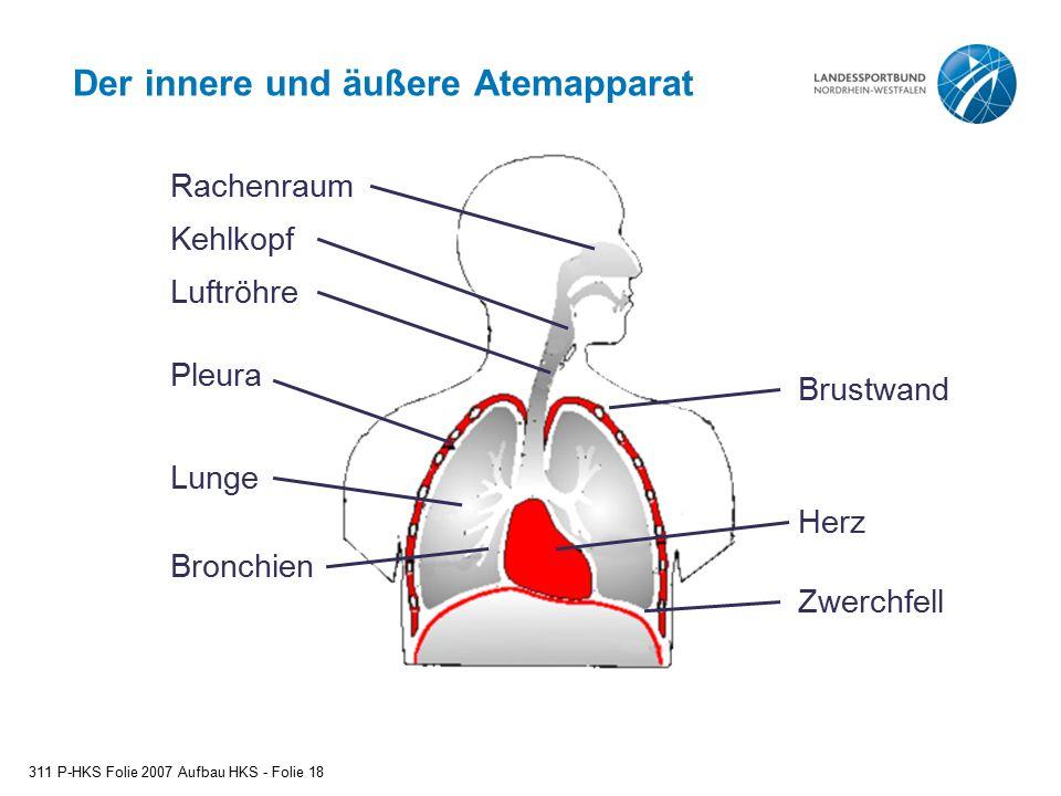 Der innere und äußere Atemapparat