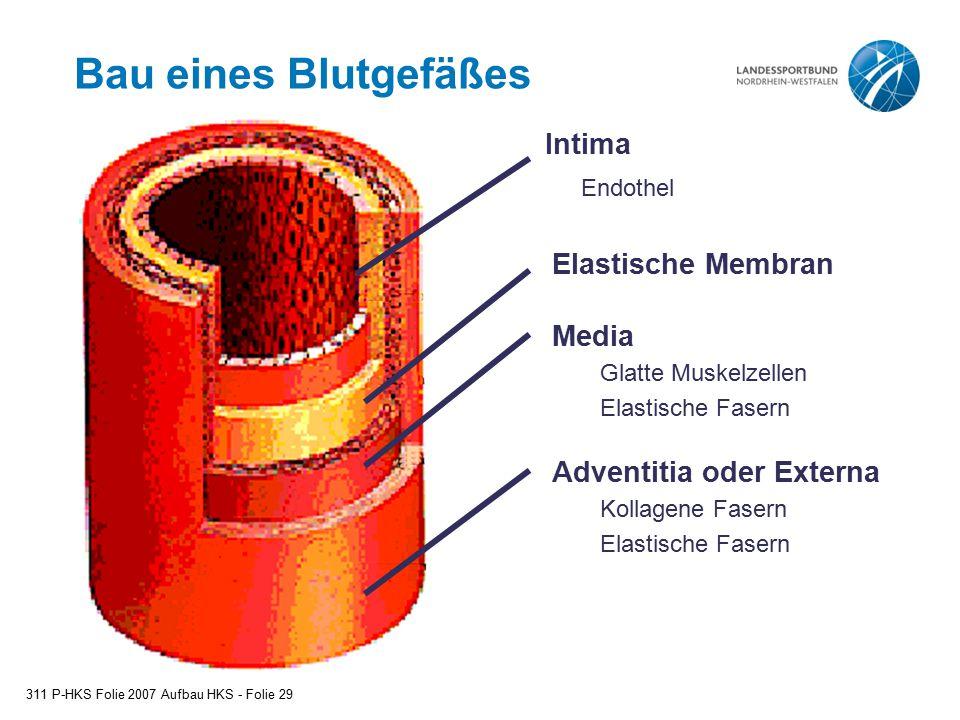 Bau eines Blutgefäßes Intima Endothel Elastische Membran Media