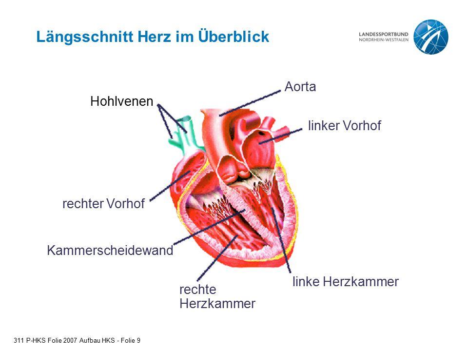 Wunderbar Rechten Herzkranzanatomie Zeitgenössisch - Menschliche ...