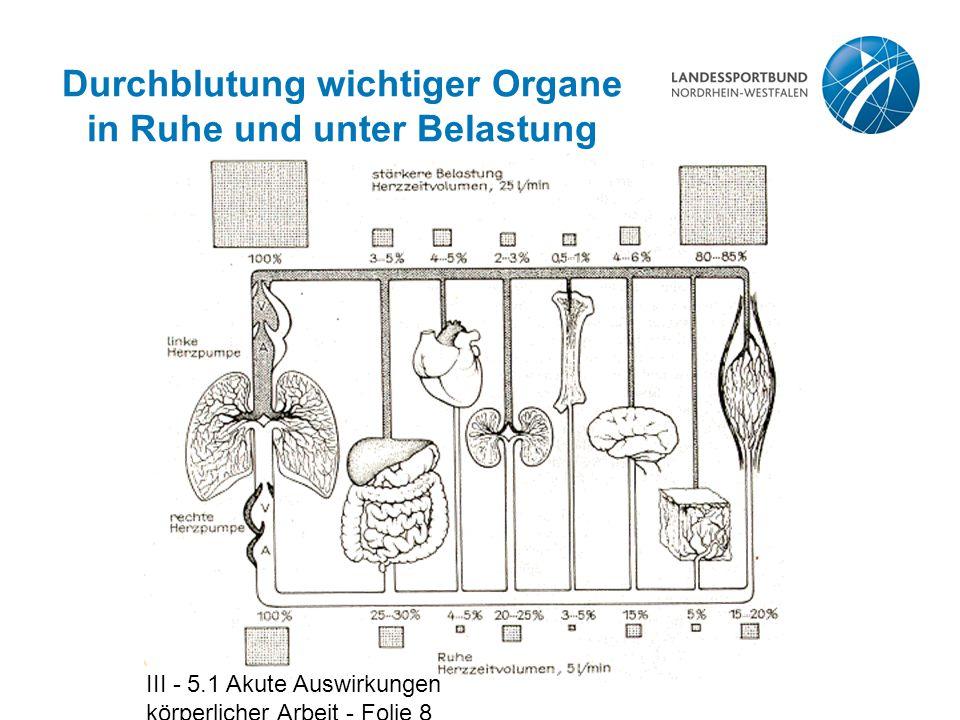 Durchblutung wichtiger Organe in Ruhe und unter Belastung