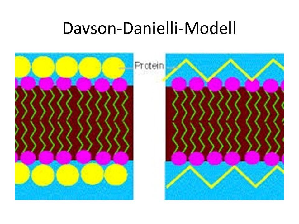 Davson-Danielli-Modell