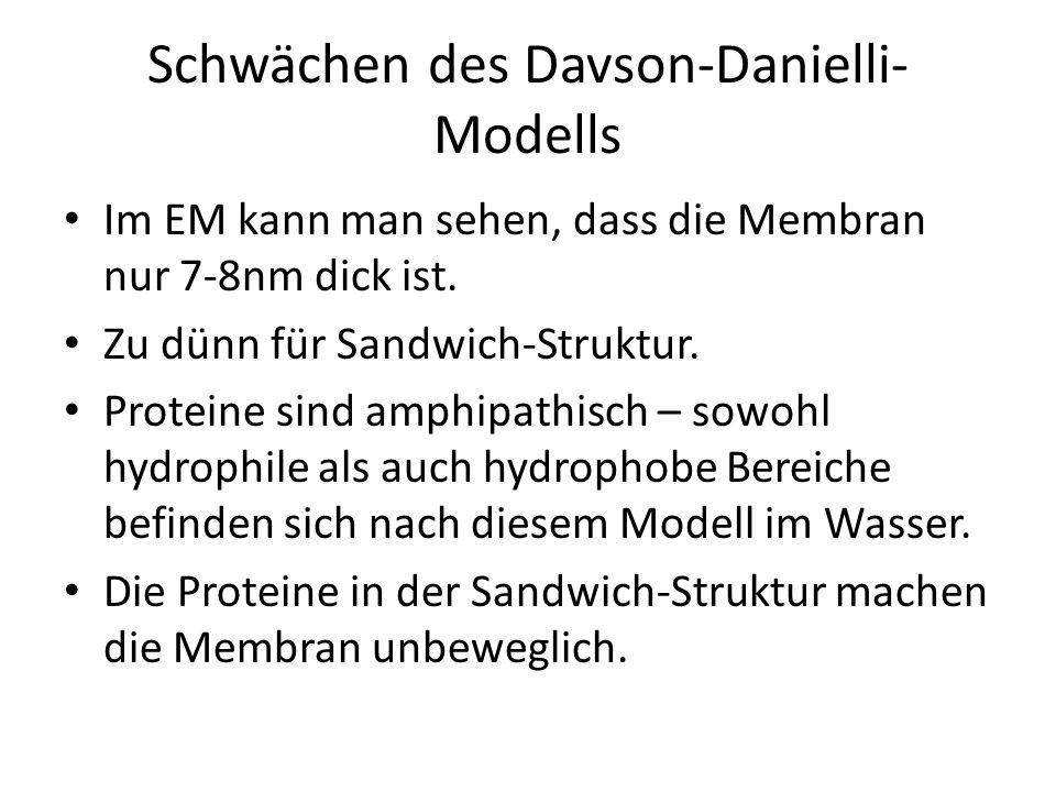 Schwächen des Davson-Danielli-Modells
