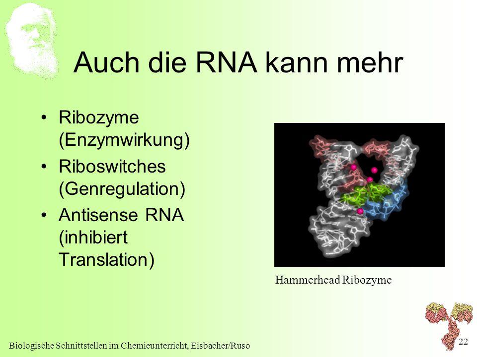 Auch die RNA kann mehr Ribozyme (Enzymwirkung)