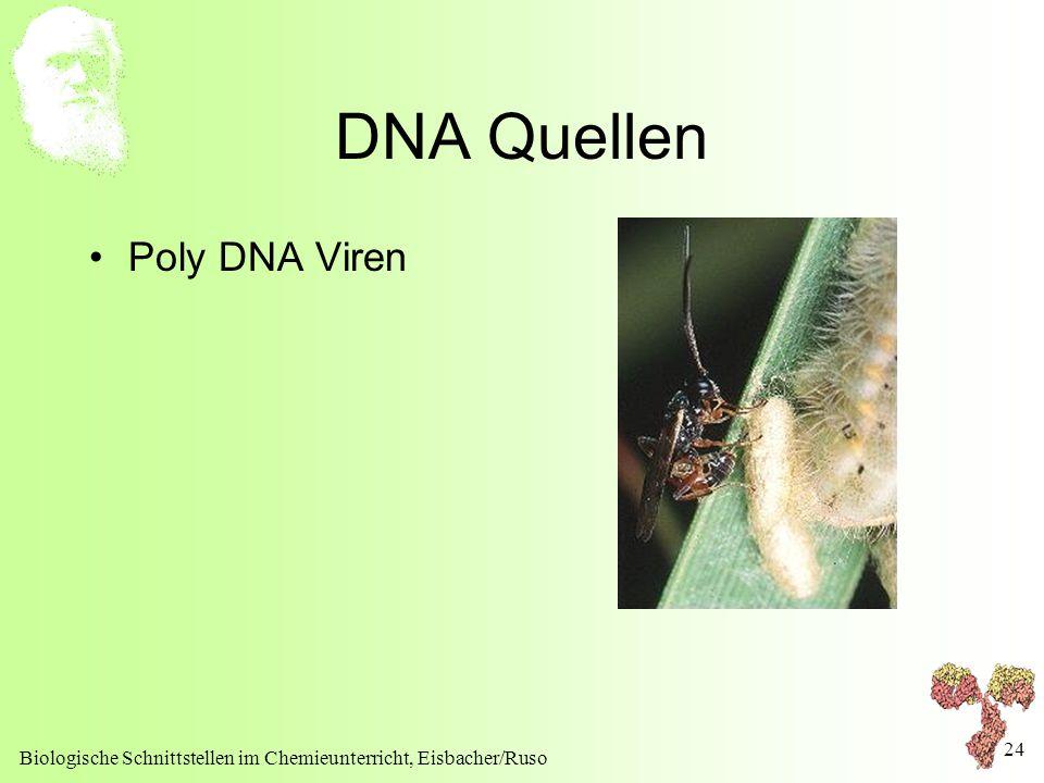 DNA Quellen Poly DNA Viren